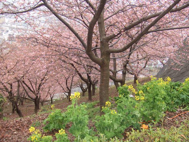 『第十三回まつだ桜まつり』