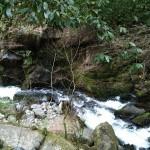 出エジプト記の鴨居と赤いたぬきの鳥居 | 湯河原(神奈川県)