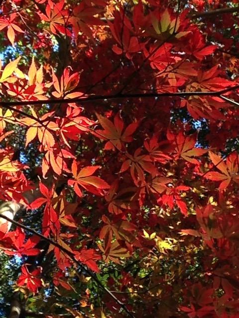 溪(たに)の流に散り浮くもみじ〜 美しい故郷、万葉公園の清流と紅葉