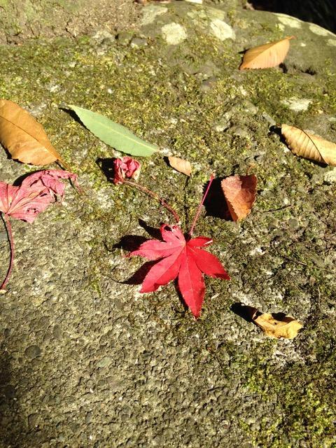 万葉公園の紅葉