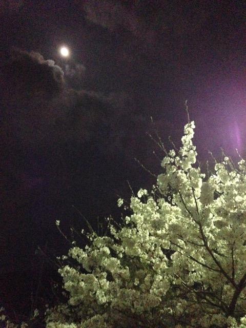 朧月夜 (おぼろづきよ)と夜桜